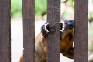 Dog biting wood