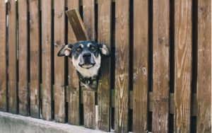 Dog poking his head out of a fence