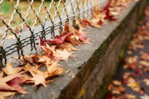 Autumn leaves near a metal fence and old wall