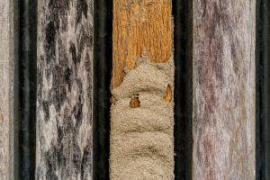 Termite damage on wooden privacy fence
